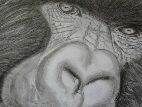 Silverback Gorilla pencil with some graphite and charcoal stick